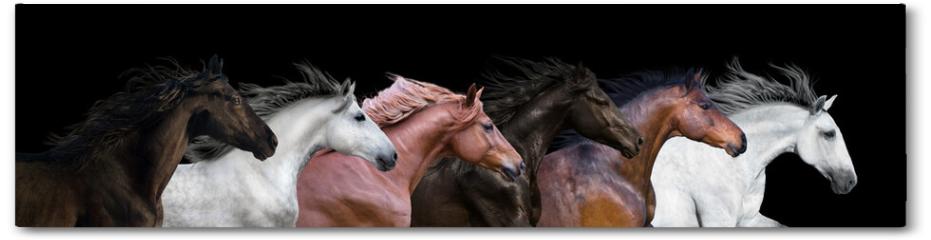 Plakat - Six horses portraits isolated on a black background
