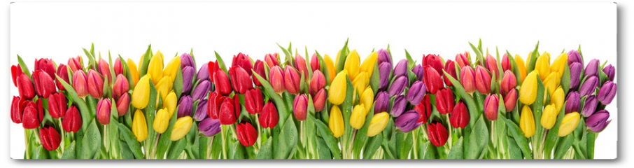 Plakat - Fresh spring tulip flowers water drops Floral banner