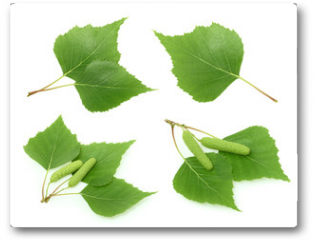 Plakat - Birch leaves isolated. set