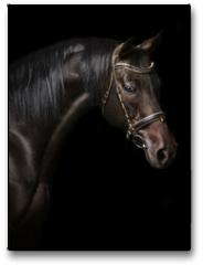 Plakat - Portrait of a bay stallion