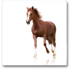 Plakat - red horse with the three white legs and white line on the face isolated on white background runs