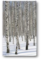 Plakat - Winter Forest
