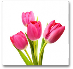 Plakat - Flower Tulips as Symbol of Romance and Love