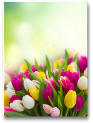 Plakat - bouquet of  pink, purple and white  tulips