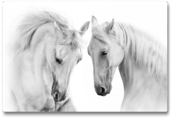 Plakat - Couple of white horse on white background