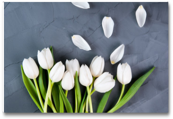 Plakat - white tulips on a grey background