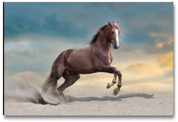 Plakat - Red horse run in desert dust against blue sky