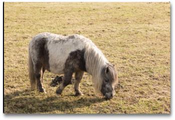 Plakat - horses in a marsh landscape