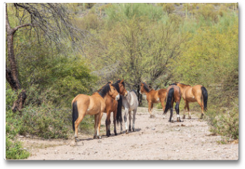 Plakat - Wild Horses Near the Salt River in the Arizona Desert