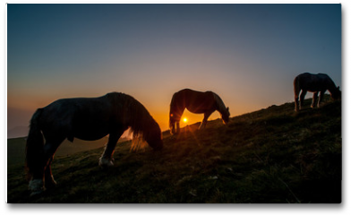 Plakat - horse grazing in the mountains at sunset