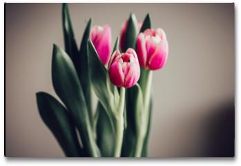 Plakat - Schlichter Strauß Tulpen vor neutralem Hintergrund
