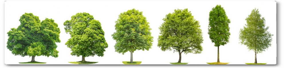 Plakat - Collection trees maple oak birch chestnut Isolated nature objects