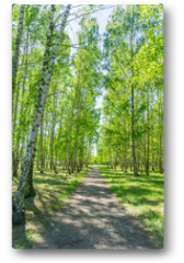 Plakat - Birkenwald Weg