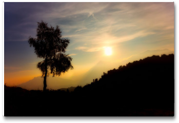 Plakat - Silhouette of birch plant on the alps at sunset