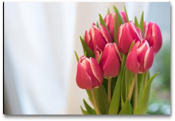 Plakat - Tulpen 1