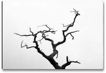 Plakat - Árbol muerto, blanco y negro