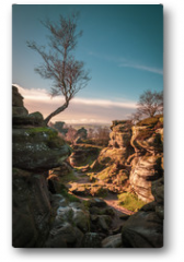 Plakat - Birch Tree and Natural Rock Formation
