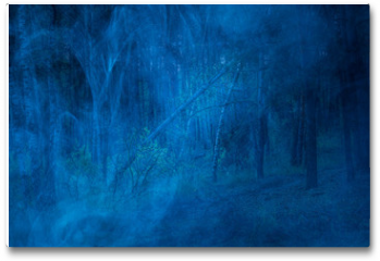 Plakat - mysterious night wilderness covered with blue fog fantastic forest with tall trees