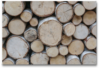 Plakat - sawed ends of a pile of birch firewod