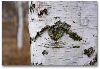 Plakat - pattern in the form of an eye on a birch bark