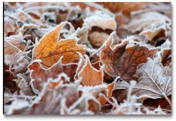 Plakat - Winteranfang