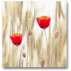 Plakat - Poppies