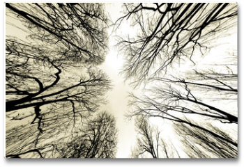 Plakat - trees