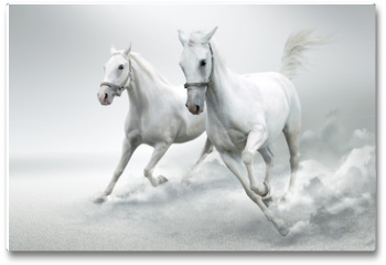Plakat - White horses