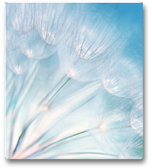 Plakat - Abstract dandelion flower background
