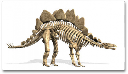 Plakat - Stegosaurus Skeleton