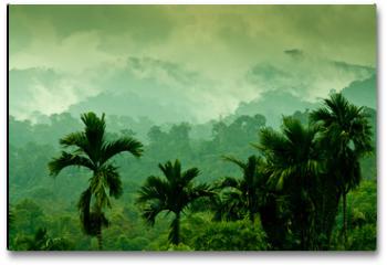 Plakat - Selva de Sumatra