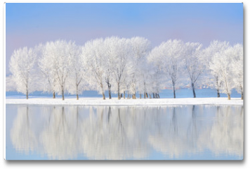 Plakat - winter trees covered with frost