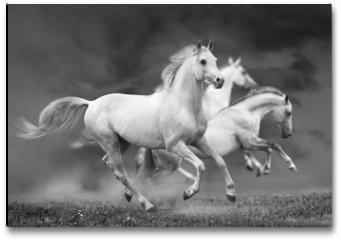 Plakat - horses run