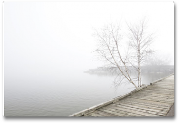Plakat - Pier and white birch trees on foggy lake