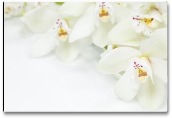 Plakat - Orchid Flowers
