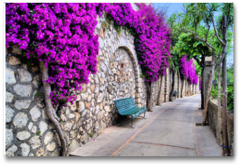 Plakat - Vibrant flower draped pathway in Capri, Italy
