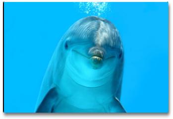 Plakat - Dolphin Look
