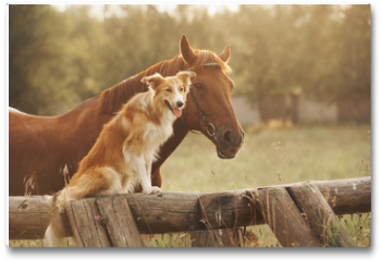 Plakat - Red border collie dog and horse