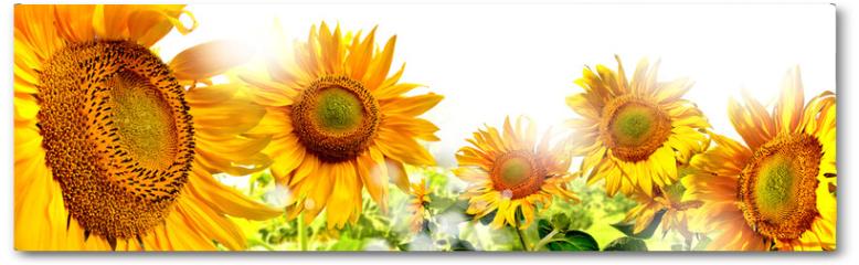 Plakat - kwiaty