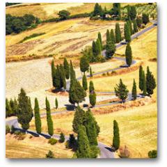 Plakat - Cypress tree scenic road in Monticchiello, Tuscany, Italy.