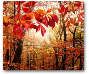 Plakat - Herbst: Mystischer Wald