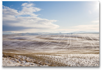 Plakat - sunny landscape of wide field with dry grass under snow