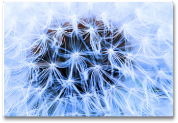 Plakat - The Dandelion background.