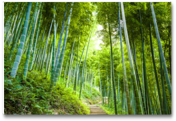 Plakat - Bamboo forest and walkway