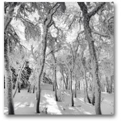 Plakat - Frozen Forest
