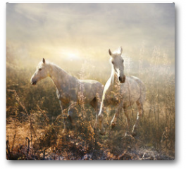 Plakat - white horse galloping on meadow