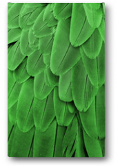 Plakat - Green Feathers