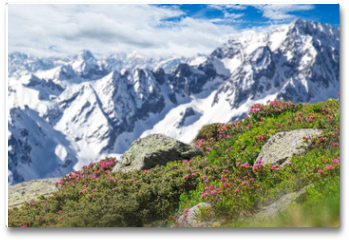 Plakat - Beautiful flowers with Alps mountains.