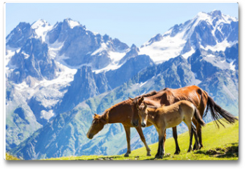 Plakat - Horse in mountains
