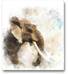 Plakat - Watercolor Image Of  Elephant